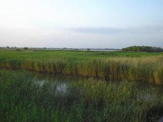 葦原と西の湖.jpg