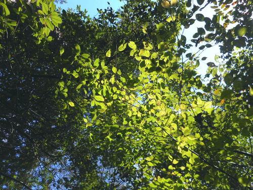 木々1.jpg