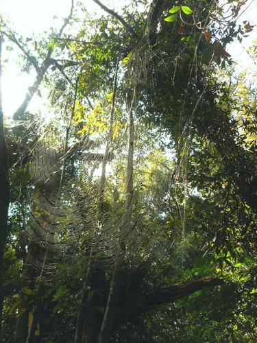 蜘蛛の巣.jpg