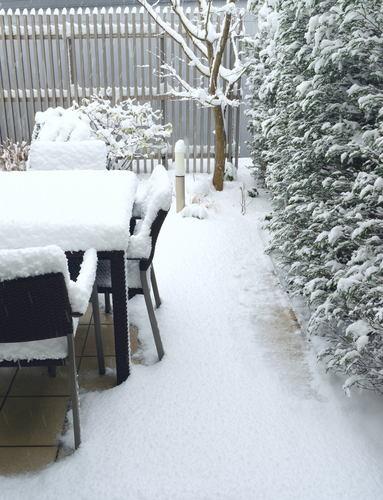 snow0120-1.jpg